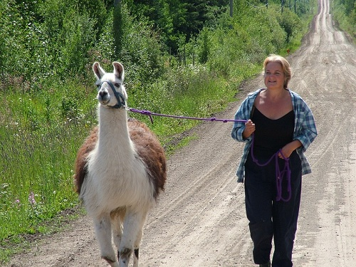llama trekking, llama walking, halter