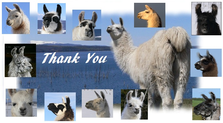 helping llamas in need