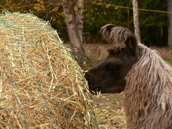Slow Feeding Hay Nets