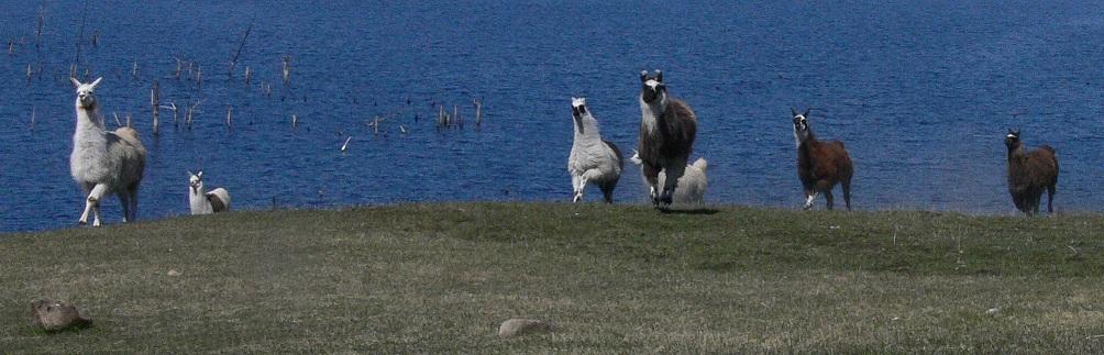Llama Games