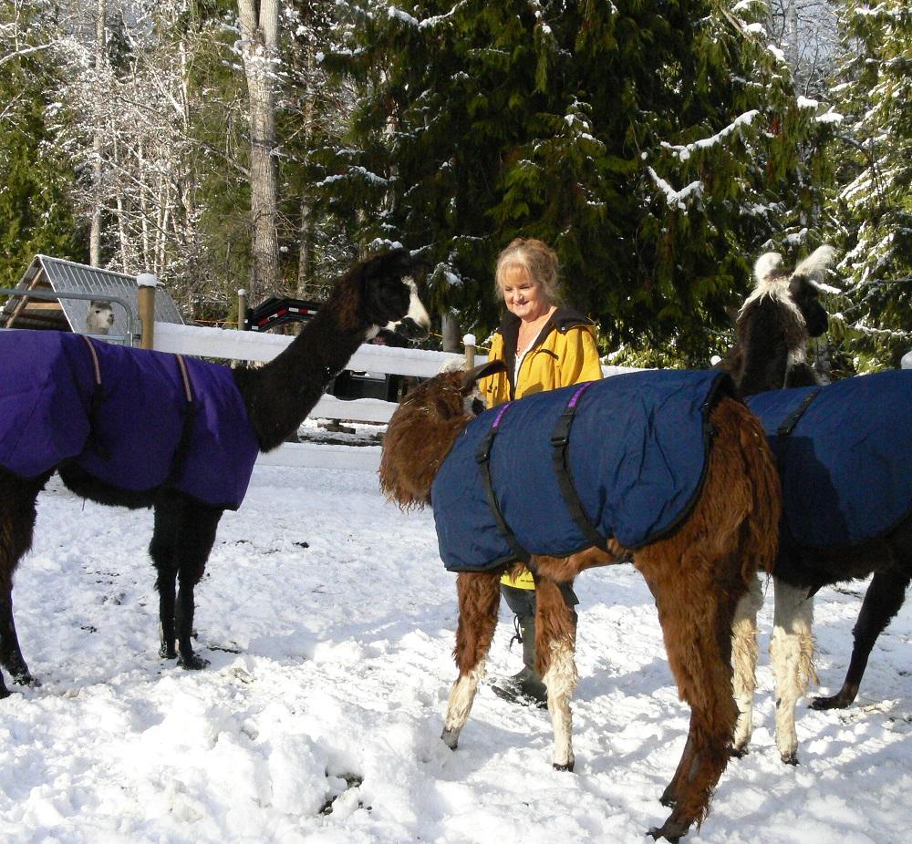 llama coats, winter coats for llamas