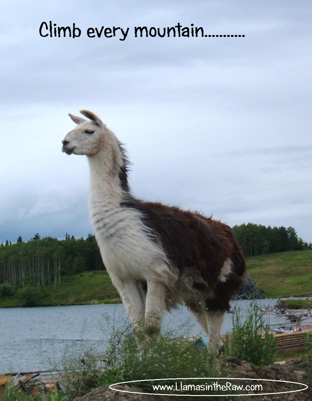 climb every mountain - llama