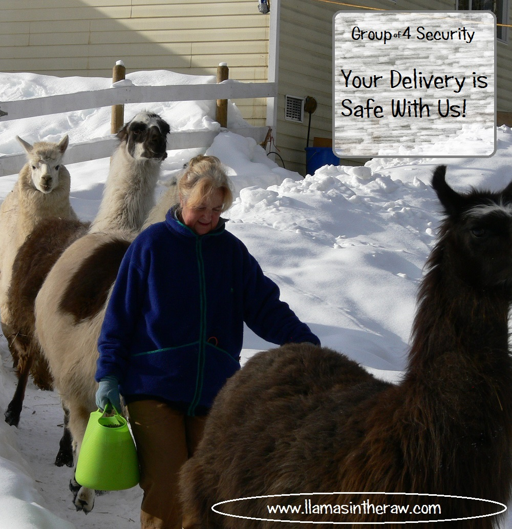llama security force, cold weather feed for llamas and alpacas