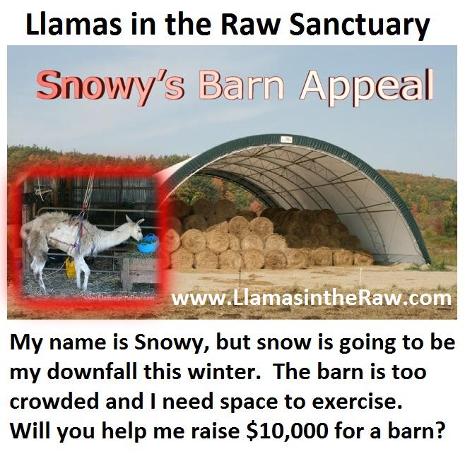 clearspan barn for llama rescue