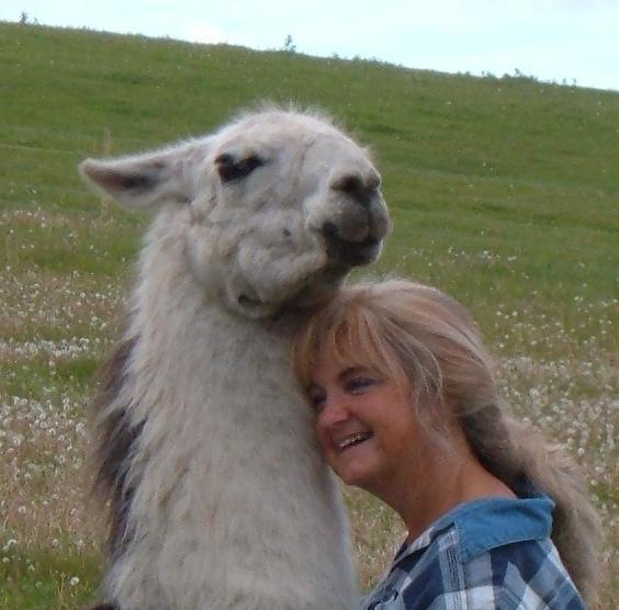 Llama Rescue?  Are You Kidding Me?