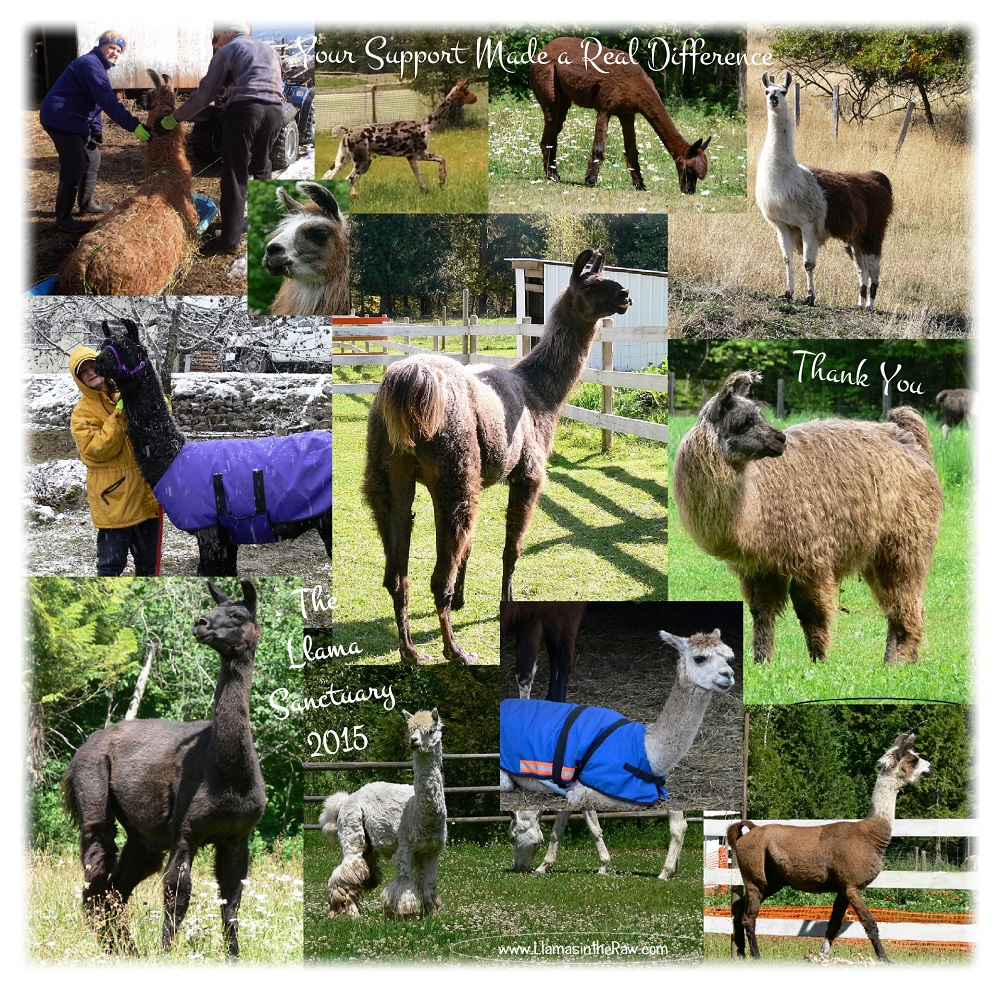 llama sanctuary achieved in 2015