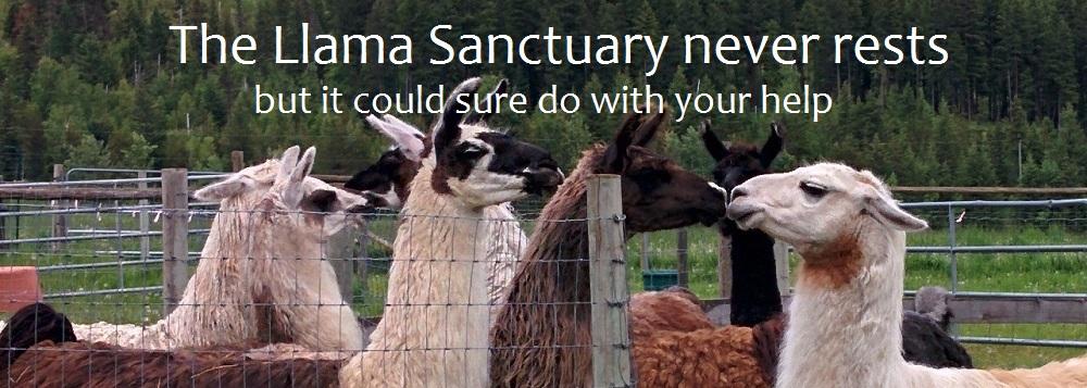 crowdfunding the llama sanctuary