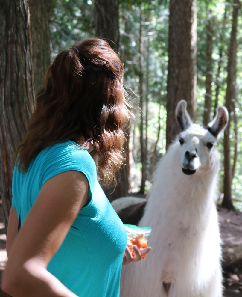 hang out with the llamas in the shady Grove
