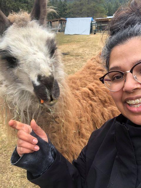 Getting close to a llama