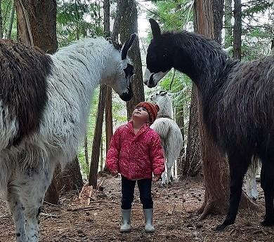 Giant llamas