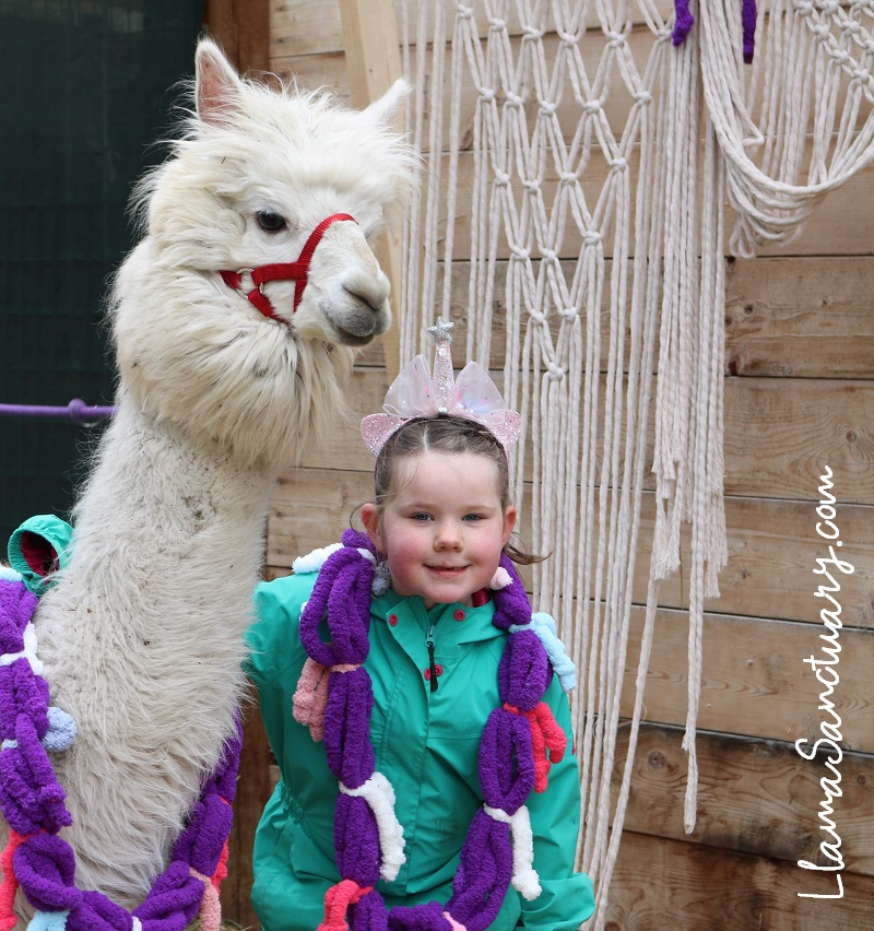 Birthday Party at The Llama Sanctuary