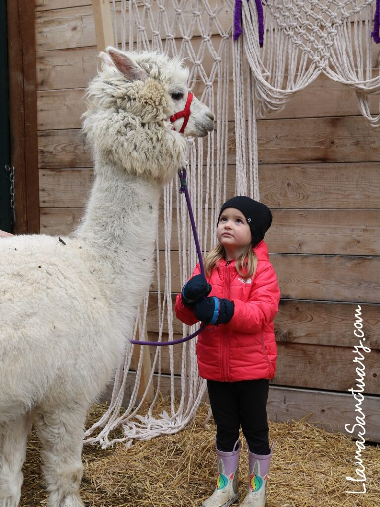 awesome alpaca